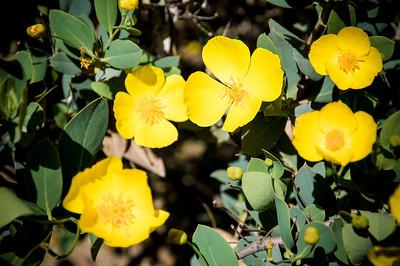 2012-03-14 Rancho Santa Ana BG-7940