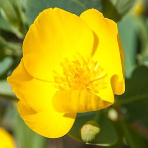 2012-03-14 Rancho Santa Ana BG-7945
