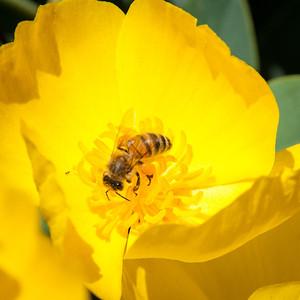 2012-03-14 Rancho Santa Ana BG-7946