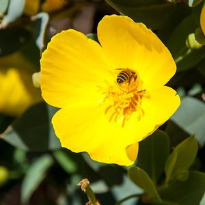 2012-03-14 Rancho Santa Ana BG-7943
