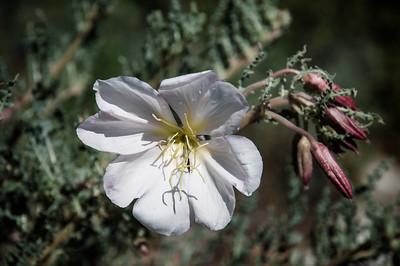 2012-03-14 Rancho Santa Ana BG-7937