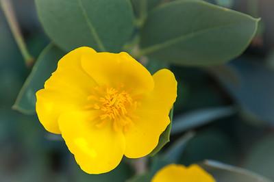 2012-03-14 Rancho Santa Ana BG-7955