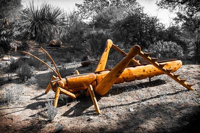 2012-03-14 Rancho Santa Ana BG BW marching ants-7932