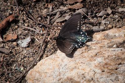 2012-03-14 Rancho Santa Ana BG-7952
