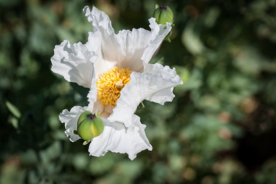 2012-03-14 Rancho Santa Ana BG-8019