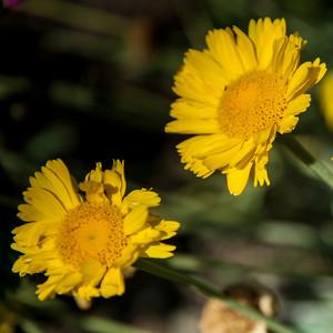2012-03-14 Rancho Santa Ana BG-7913