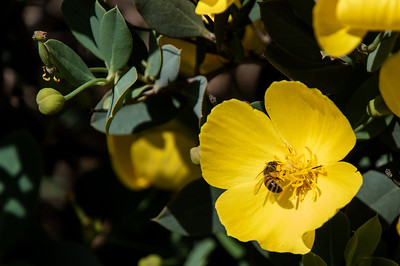2012-03-14 Rancho Santa Ana BG-7942