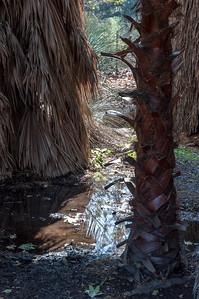 2012-03-14 Rancho Santa Ana BG-7928