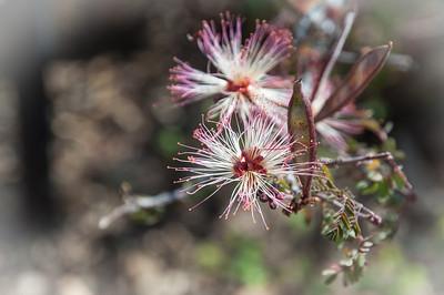2012-03-14 Rancho Santa Ana BG-7918