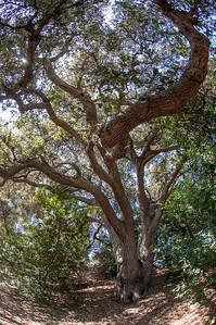 2012-03-14 Rancho Santa Ana BG-7981