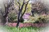 2012-03-14 Rancho Santa Ana BG-8121