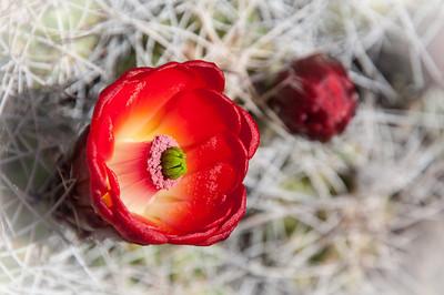 2012-03-14 Rancho Santa Ana BG-7915
