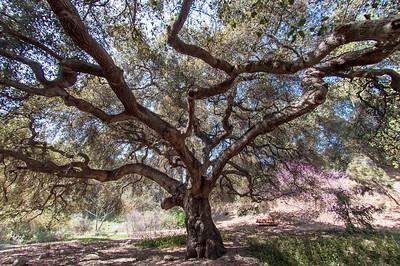 2012-03-14 Rancho Santa Ana BG-8010