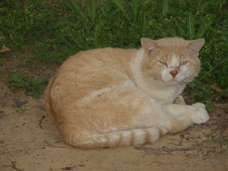 Old Doc.  He is calm here, but leads a rather wild life.