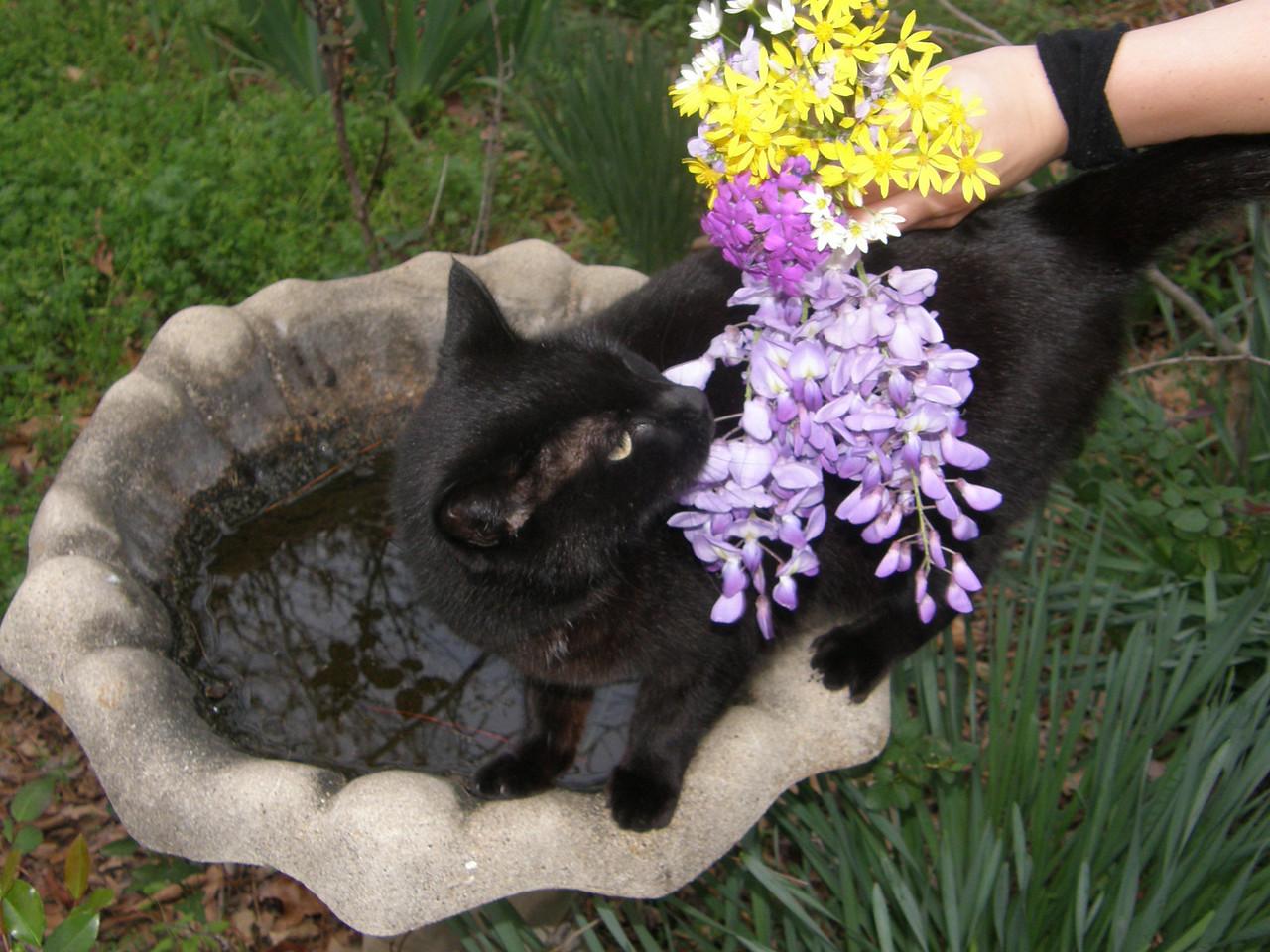 Sarah lets Salem smell the flowers.