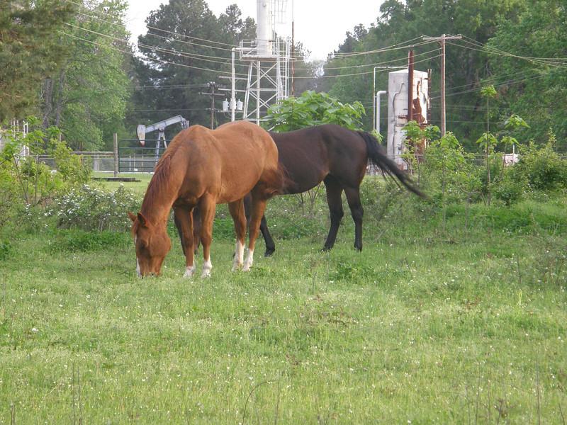 One of my neighbor's horses munching away.
