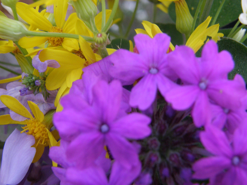 Yea, messed up the focus some here, but still pretty flowers.