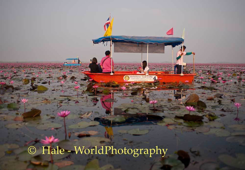 Morning Visitors To Thale Bua Daeng (Red Lotus Sea)