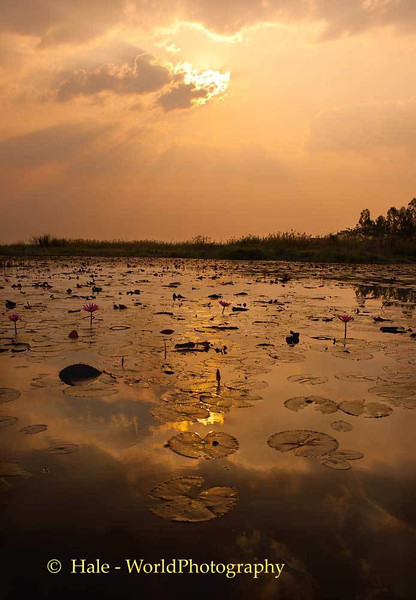 Thale Bua Daeng (Red Lotus Sea) Morning