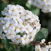 Rhododendron garden-0772