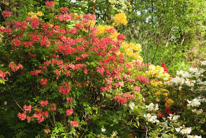 Rhododendron garden-0747