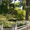 Rhododendron garden-0770