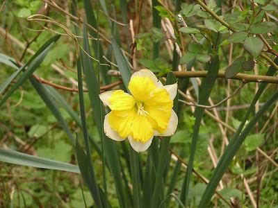 Ridgeside Blooms