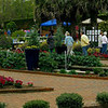 """Panorama view of gardens.  This is a composite of three photographs.  You can see the """"error"""" I had with one person walking through the picture sequence.  He was just walking out of range of the last picture (see foreground on the right).  I caught his heel only.  The picture editing program I use """"stitches"""" the pictures together where I have overlapped edges.  The match is done automatically, using embedded codes in the picture to match the image edges.  You can see how precise it was with the line going between the ladies just above the errant heel.  Thankfully, they didn't move much."""