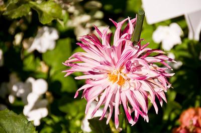 2008-10-18 Garden Tour-0282