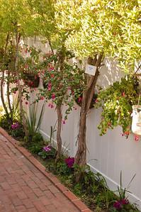 2008-10-18 Garden Tour-0316