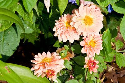 2008-10-18 Garden Tour-0261