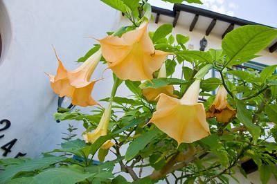 2008-10-18 Garden Tour-0294