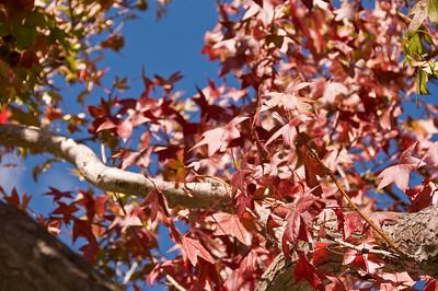 2008-10-18 Garden Tour-0350
