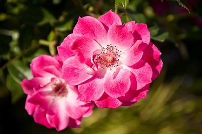 2008-10-18 Garden Tour-0287