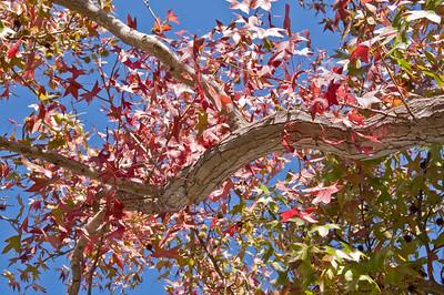 2008-10-18 Garden Tour-0351