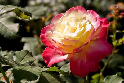 2008-10-18 Garden Tour-0375