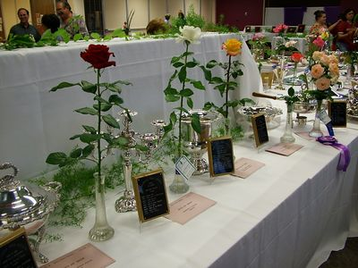 The highest awards for individual hybrid tea roses: Queen of Show (center), King and Princess of Show on each side.