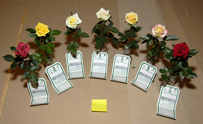 Collection of seven different miniature specimens, Pacific Southwest District Ralph Moore Trophy winner.