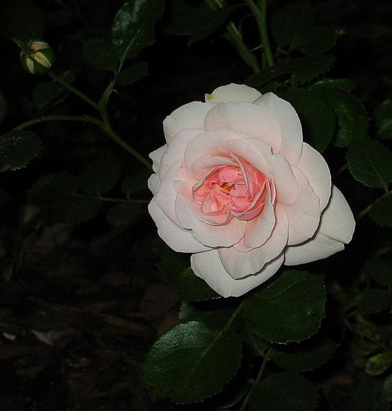 20030508 Queen Margarethe nt cl 2