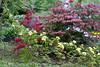00aFavorite 04132011 'Yellow Lady Banks' Rose'