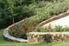 08152008 Roses, Duke Gardens