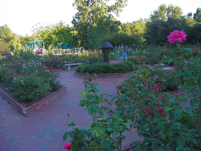 Pathways and fountain with 'Perfume Delight' hybrid tea bloom in R fg