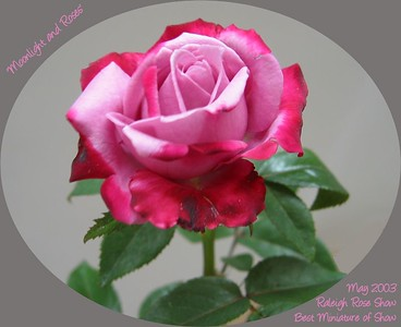 Roses - Rose Shows