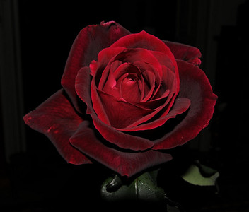 Roses. D300