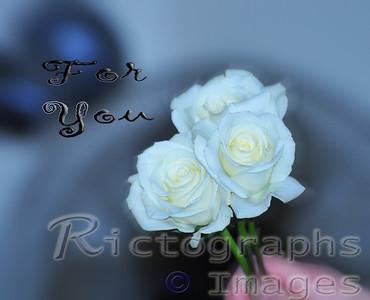 White,Roses, flowers,