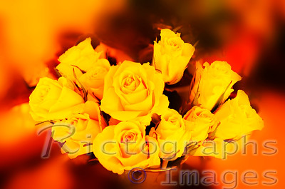 A Yellow Rose Bouquet, Rictographs Images