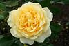 rose29-30-09-07 003