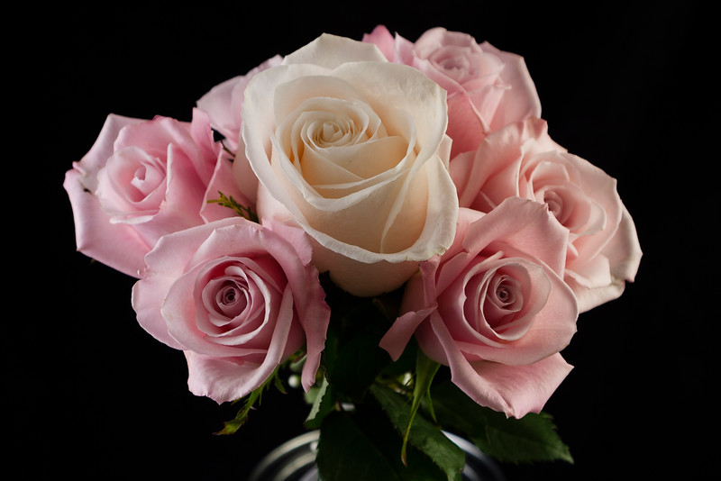 Flower050a (Rose)