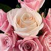Flower050b (Rose)