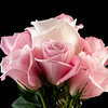 Flower050c (Rose)